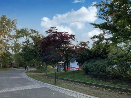 中島公園から撮った空。
