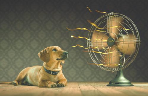 温水だけではなく、温風も。